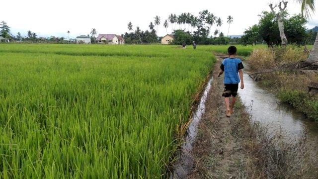Persulit Pelayanan, Petani Desa Dongko Minta Pemkab Evaluasi BPP Lempe